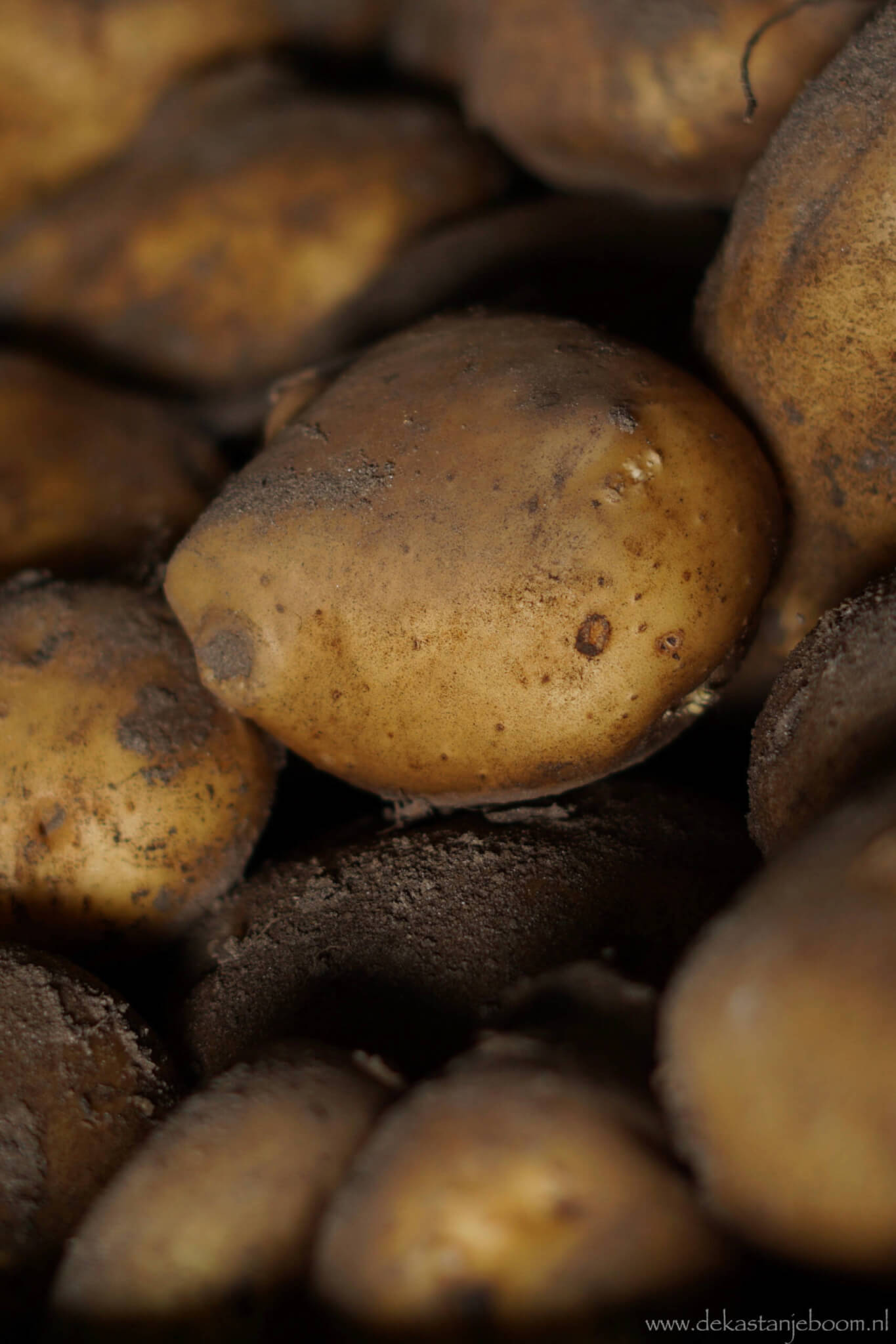 Aardappels los