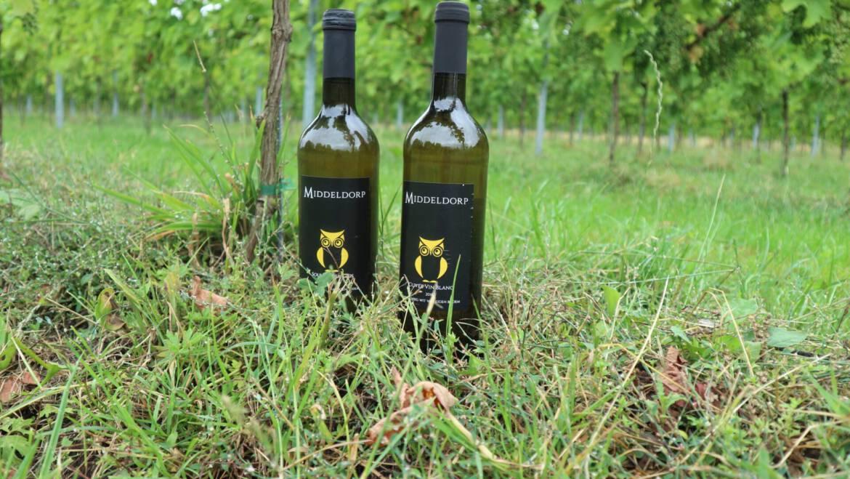 Nieuw in ons assortiment – Wijn van Wijnhoeve Middeldorp