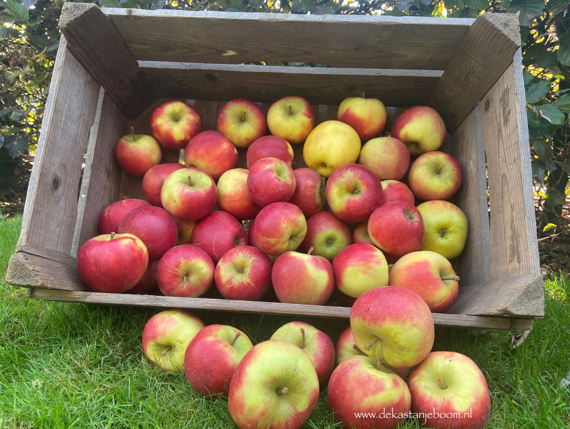 Nieuwe oogst appels & peren
